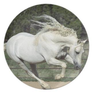 Andalusian Stallion running, PR Melamine Plate