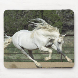 Andalusian Stallion running, PR Mouse Pad