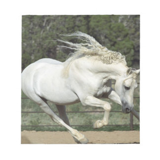 Andalusian Stallion running, PR Note Pad