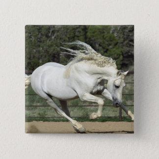Andalusian Stallion running, PR Pinback Button