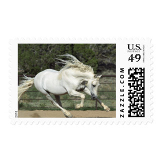 Andalusian Stallion running, PR Postage