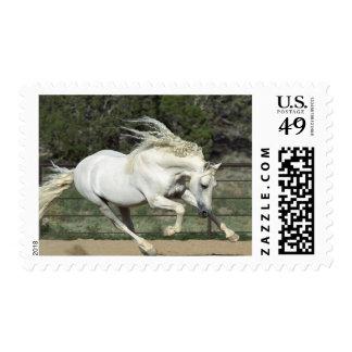 Andalusian Stallion running, PR Postage Stamp