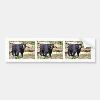 Andean bear bumper sticker