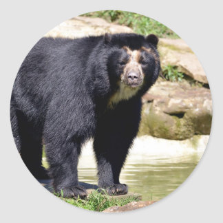 Andean bear classic round sticker