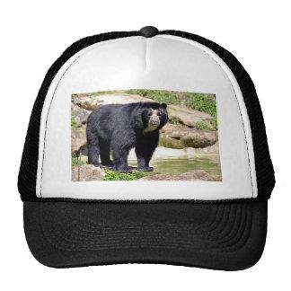 Andean bear mesh hats