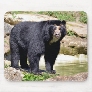 Andean bear mouse pad