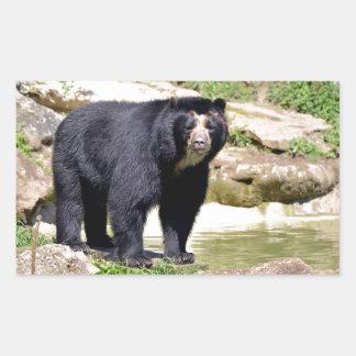 Andean bear rectangular sticker