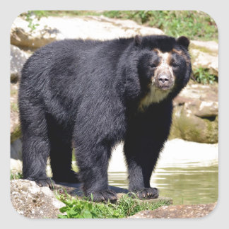 Andean bear square sticker