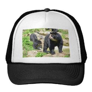 Andean bears mesh hats