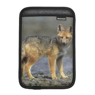 Andean Fox, (Dusicyon culpaeus), Paramo Cotopaxi iPad Mini Sleeves