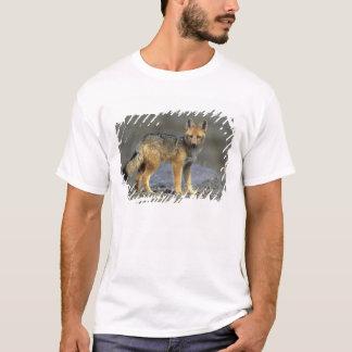 Andean Fox, (Dusicyon culpaeus), Paramo Cotopaxi T-Shirt