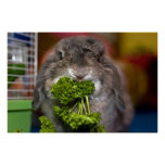 Andora + parsley (print)