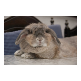Andora the bunny: Chillaxing Poster