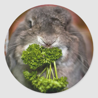Andora the bunny: Parsley attack Classic Round Sticker