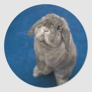Andora the bunny: Periscoping for treats Classic Round Sticker