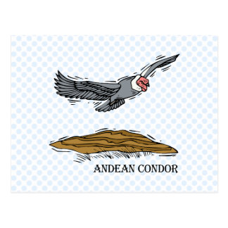 Andrea the Andea Condor Post Cards