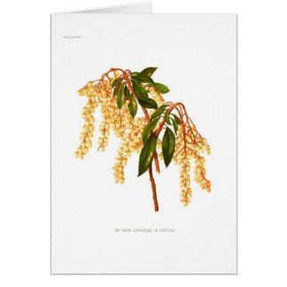 Andromeda japonica card