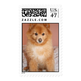 Andy the Pomeranian too cute Postage
