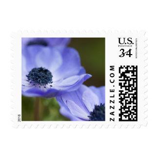 Anémona azul timbre postal