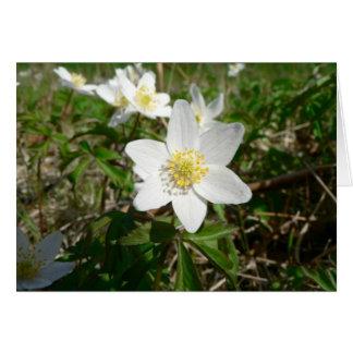 Anémona de madera varias flores de Whte Felicitacion