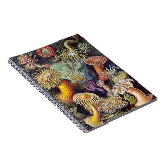 Anémona de mar acuática cuadernos