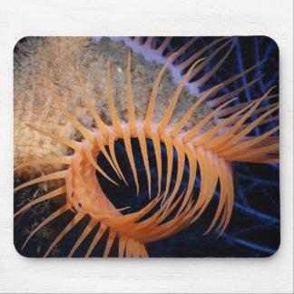 Anémona de mar del atrapamoscas de Venus Alfombrillas De Raton