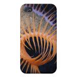 Anémona de mar del atrapamoscas de Venus iPhone 4 Fundas