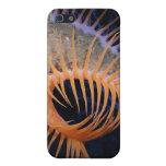 Anémona de mar del atrapamoscas de Venus iPhone 5 Carcasas