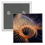 Anémona de mar del atrapamoscas de Venus Pin