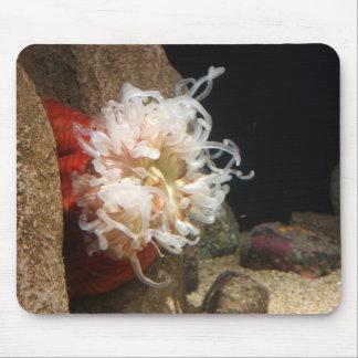 Anémona de mar Mousepad