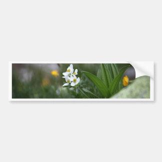 anémona Narciso-florecida (narcissiflora de la Pegatina Para Auto