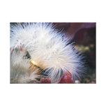 Anémona plumosa - lona envuelta impresión en lienzo estirada
