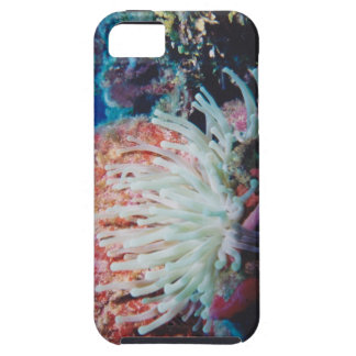 Anémona redux iPhone 5 Case-Mate carcasas