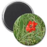Anémona roja que florece en un campo verde imán de frigorifico