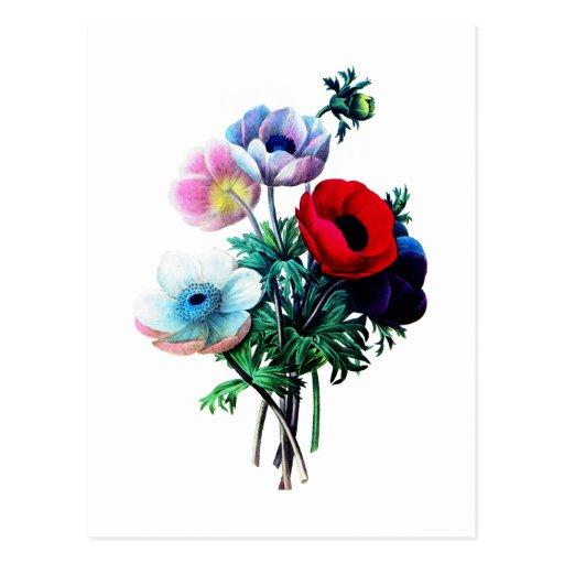 Anémonas blancas y azules rojas por Redoute Tarjetas Postales