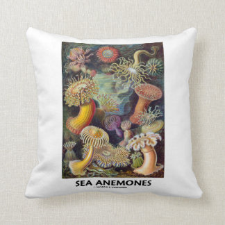 Anémonas de mar cojín