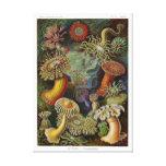 Anémonas de mar de Ernst Haeckel Impresion De Lienzo
