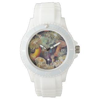 Anémonas de mar del vintage, animales acuáticos de reloj