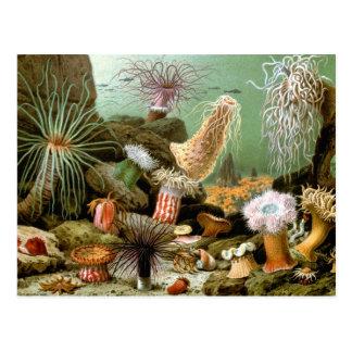 Anémonas de mar del vintage. Animales de la vida Postal