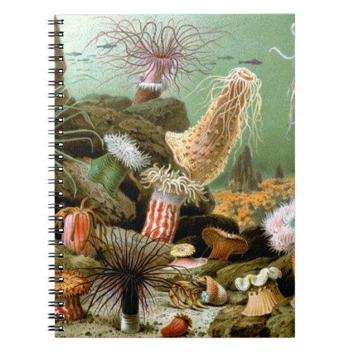 Anémonas de mar del vintage. Animales de la vida Spiral Notebooks