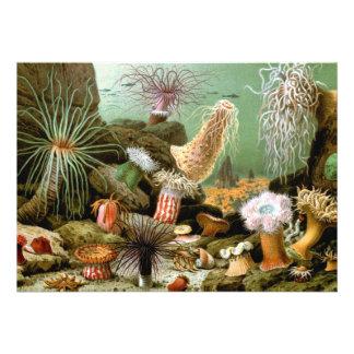 Anémonas de mar del vintage por Merculiano Comunicado