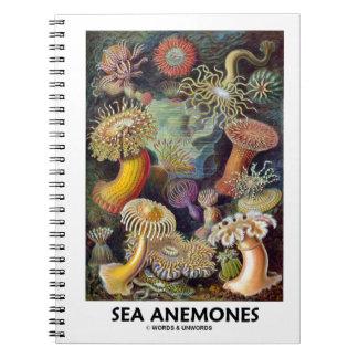 Anémonas de mar cuaderno