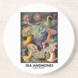 Anémonas de mar posavasos de arenisca