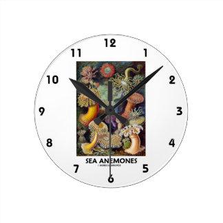 Anémonas de mar reloj redondo mediano
