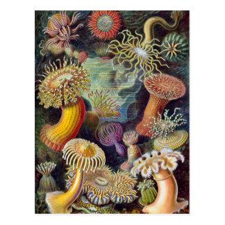 Anémonas de mar subacuáticas del vintage de Ernst Tarjetas Postales