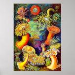 Anémonas del mar de Ernst Haeckel Posters