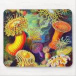 Anémonas del mar de Ernst Haeckel Tapetes De Raton