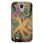 Anémonas verdes gigantes y estrellas de mar ocres