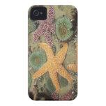 Anémonas verdes gigantes y estrellas de mar ocres Case-Mate iPhone 4 cobertura