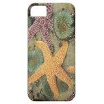 Anémonas verdes gigantes y estrellas de mar ocres iPhone 5 carcasas